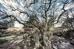 Twisted - River Avon Dartmoor (pm69photography.uk) Tags: twisted trees tree river a7rii aurorahdr2018 atmospheric atmosphere a7r2 avon scary erie dartmoor ilovedevon ilce7rm2 southwest sonya7rii spooky sony voigtlander voigtlanderheliar10mmf56 voigtlanderheliarf56 ultrawide wideangle