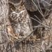 Ephrata Owls 5