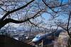 PhoTones Works #9728 (TAKUMA KIMURA) Tags: photones sigma sd quattro h takuma kimura 木村 琢磨 風景 景色 自然 landscape nature snap 桜 cherry sakura blossom