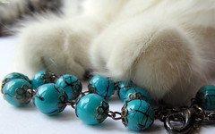 I Guess That's Why They Call It The Blues (Lisa Zins) Tags: elijah lisazins cat kittens kitten feline petsandanimals pets animals mainecoonmixkitten macro macromondays 2018 canon powershot sx150 beads paws blue march26 monday theblues