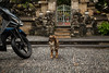 motorbike security (tanya.mesch) Tags: vacation bali indonesia asia november 2016 ocean beach surfing blue water sky monkeys nature uluwatu temple forest rocks cliff rain