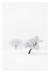 Crooked (bprice0715) Tags: canon canoneos5dmarkiii landscape landscapephotography nature naturephotography beautiful beauty beautyinnature blackandwhite bw blackwhite monochrome mono winter snowylandscape snow snowing white highkey cold frigid blizzard canon5dmarkiii fineart