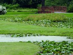 Lily pond ~ Forest Park MA (Jane Lazarz) Tags: janeelizabethlazarz walkingcolorado nikon p900 nikonp900 janelazarz lily lotus pond green bridge forestpark springfieldma water stream park summerinnewengland summer grass