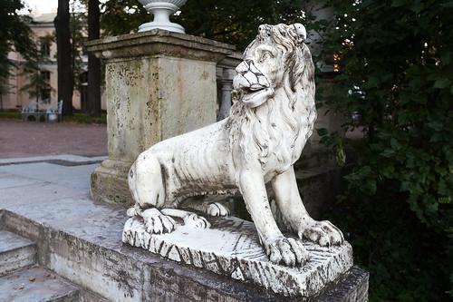 Lion 5