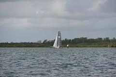 LOX_3764 (Lox Pix) Tags: australia queensland brisbanetogladstone yachtrace catamaran trimaran 2018 bossracing multihull loxpix moretonbay shorncliffe cabbagetreecreek rudder aground sailing loxworx