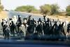 Traffic jam (Debmalya Mukherjee) Tags: debmalyamukherjee canon550d 18135 kutch rannofkutch gujrat lamb goats herd