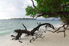 Maldives 13 (mpetr1960) Tags: maldives tree wood island beach water ocean sea sand nikon d810
