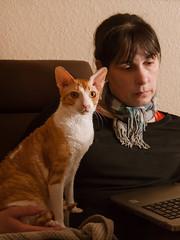 __1240323_cut (daniel kuhne) Tags: katze cat cornishrex zimtschnecke bildungsfernsehen mft panasonic gf1