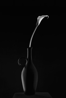 Black Vase with Calla Lilly