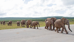 Why did the Elephant cross the road? (jimbobphoto) Tags: waterhole water elephant road ado africa tru k