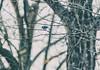 bluebird (amy buxton) Tags: amybuxton natural nature stlouis forestpark kennedywoods savanna woods forestparkforever spring skinker animals birds bluebird
