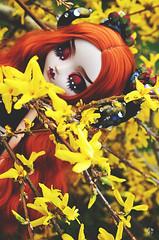 Hidden Woods (Chantepierre) Tags: pullip fc fullcusto full custo custom doll chantepierre ladicius