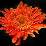 Toronto Ontario - Canada - Allan Gardens Conservatory - Toronto Tropical Garden -  Heritage thumbnail