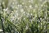 Perles de pluie (Excalibur67) Tags: nikon d750 sigma contemporary 100400f563dgoshsmc perle pluie nature prairie herbe eau
