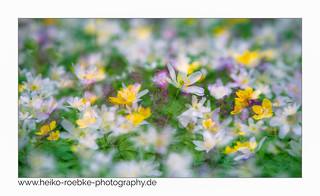 Frühlingsduft! / smell of spring!