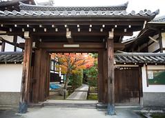 Come in (DanaMichelle309) Tags: fallfoliage japan kyoto shrine taikoan travel kyōtoshi kyōtofu jp