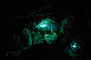 Light Of Glowworms (ytk_57) Tags: longexposure light insect glowworm takaka newzealand ef70200mmf4lisusm canoneos5dmarklll canon