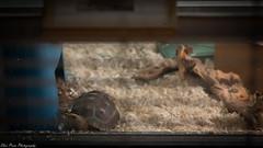 Live Animal Care Center (kuntheaprum) Tags: mirrormaze museumofscience patterns nature nikon d750 samyang 85mm f14