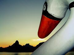 Cisne na Lagoa (rfellipe) Tags: cisne swam lake lago lagoarodrigodefreitas rio riodejaneiro sky céu pordosol sunset pedalinho mountains montanha nuvem cloud