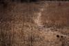 Querétaro -3426180303 (Jacobo Zanella) Tags: queretaro mexico 2018 sendero camino senda path line hidden mysterious rural land rough jacobozanella jz76