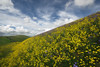 It's That Season (jojo (imagesofdream)) Tags: wildflowers california hillls sky landscape