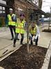 IMG_0241 (Urban Forestry) Tags: woodlawn tree treeteam prune pruning