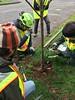 IMG_0236 (Urban Forestry) Tags: woodlawn tree treeteam prune pruning