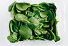 Top view of fresh spinach on white background. (wuestenigel) Tags: bunch nature water leaf background healthy vegan plant delicious macro health isolated white vegetable wooden closeup kitchen young studio agriculture fresh baby texture salad leaves summer vegetarian raw ingredient gourmet spinach natural freshness herb green lettuce food diet organic