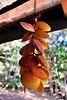 Chimes (meg.espiritu19) Tags: it'smorefuninthephilippines philippines bohol panglao novoshellmuseum shells orange chimes windchimes