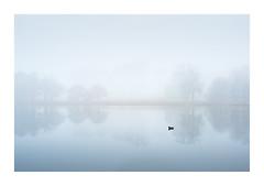 Somewhere in Norfolk 11 March 2018 (Matthew Dartford) Tags: matthewdartford bokeh depth duck england fog foggy forest lake landscape mirror mist misty norfolk reflection tree uk water woodland woods