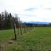 2018-04-02 Tutzing, Ilkahöhe, Starnberger See 027