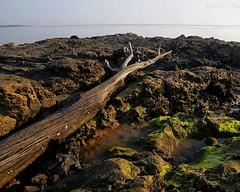 _MG1265-1268 5x4 stack quick align w (grilee3) Tags: florida blackrocktrail talbot island park beach driftwood stacking combinezp moss dofstacking landscape seascape boneyard