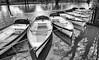 boats on the Avon (Francis Mansell) Tags: boat rowingboat vehicle riveravon stratforduponavon monochrome blackwhite water river reflection tree park shakespeareanheroines shakespeare williamshakespeare juliet swan niksilverefexpro2