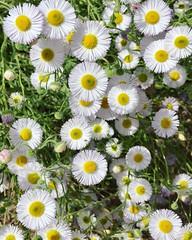 Wildflowers, Springs Preserve