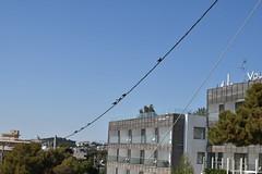 DSC_1457 (mikebsnaps) Tags: birds pidgeons summer sun sky vouliagmeni athens greece nikon d5500 mountain
