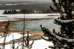 Yellowstone NP Trip - Day 5 (87) (tommaync) Tags: yellowstonenationalpark yellowstone yellowstonenp national park nationalpark february 2018 winter nikon d7500 wyoming grandprismatichotspring grandprismatic hotspringoverlook steam water thermal bacteria algae minerals