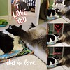 Patches and Checkers love Story ❤️ (dianecorfield) Tags: patches checkers lovebetweencats onecathaspassedaway onecatisstillinmourning