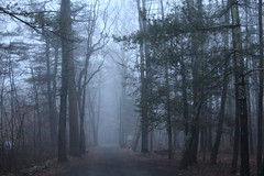 Fog down the dirt road (Read2me) Tags: fog outdoors trees cye road path woods forest pregamesweepwinner street gamewinner pregameduelwinner storybookotr thechallengefactory tcfunanimousmay gamex2 perpetualchallengewinner 15challengeswinner storybookttw friendlychallenges game x3 gamex3 agcgwinner