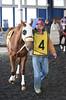 2018-04-15 (15) r2 #4 Party Regent (JLeeFleenor) Tags: photos photography md marylandhorseracing maryland marylandracing laurelpark outside outdoors sports horses thoroughbreds equine equestrian cheval cavalo cavallo cavall caballo pferd paard perd hevonen hest hestur cal kon konj beygir capall ceffyl cuddy yarraman faras alogo soos kuda uma pfeerd koin حصان кон 马 häst άλογο סוס घोड़ा 馬 koń лошадь paddock