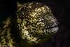 Japan_IzuPeninsula_Osezaki-20180422-0251 (mtv1983) Tags: diving izu japan osezaki anemone anemonefish beautiful beautifulcreature blueocean closeup clownfish colorful conservation corareef coral diver eel fish fishface frog frogfish macro macrophotography marineconservation marinelife moray morayeel nature nemo nudibranch ocean reef scuba scubadiving sea sealife seaslug smallcreature underwater underwaterphotography wildlife