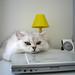 ネコ:IMG_1650