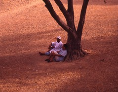 Meritato riposo (Gianni Dominici) Tags: travel people india tree 4giannid 4elementiterra 4egiannid 4eterra