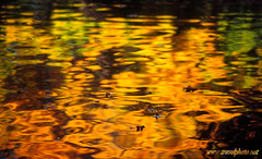 Autumn Reflection (laurenz) Tags: travel autumn light orange color colour reflection green fall nature water colors 510fav reflections catchycolors germany deutschland photography gold mirror reisen colorful wasser europa europe wiesbaden colours herbst colores reflected alemania mirrored 525fav farbe allemagne spiegelung spiegelbild farbig couleur bunt deutsch reise farben reflektion laurenz travelphotography salzsee farbfotos coloroso gespiegelt lbobke