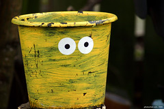 Friendly Bucket - by Photochiel