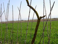PICT0958 (M a y s a m) Tags: farm garden fence stick maysam photo sari north iran