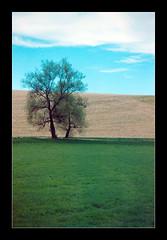 Fields 9/9 (Walter Quirtmair) Tags: 2005 film field spring swq takenbywalter landshut eos300