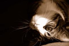 Gato al revés