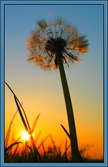 Sunset by the sandpit.. (Truus) Tags: final final2 final3 final4 final5 nofinal final6 final7 nofinal2 final8 final9 savedbybest2005 wow sunset dandelion sun sunsets around house