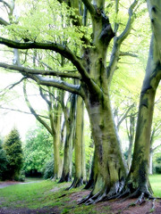 trees in the rain 4 (Marshall24) Tags: park uk trees england green botanicalgardens southport botanicgardens merseyside marshall24