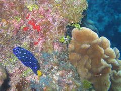 site: Heddy's Reef - 16 (hazybluedot) Tags: vacation fish underwater scuba diving caribbean caymanbrac